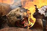 澳洲大火燃烧四个月,超两万只考拉火中死亡