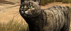 大神制作《巫师3:狂猎》高清Mod   更加生动的猫、鸡等动物