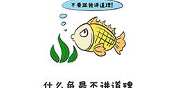谐音梗挑战第39关攻略  什么鱼最不讲道理