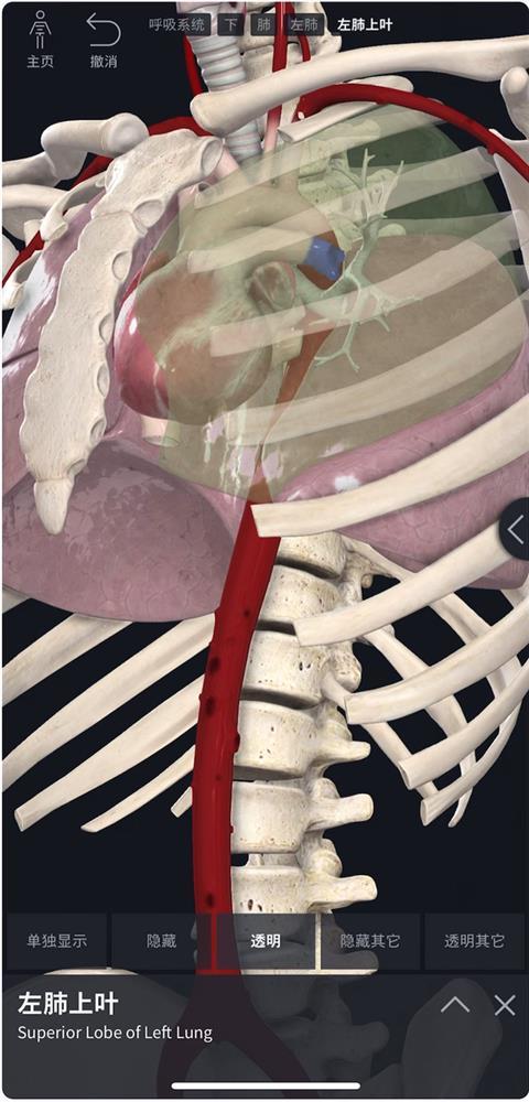 Complete Anatomy-2.jpg