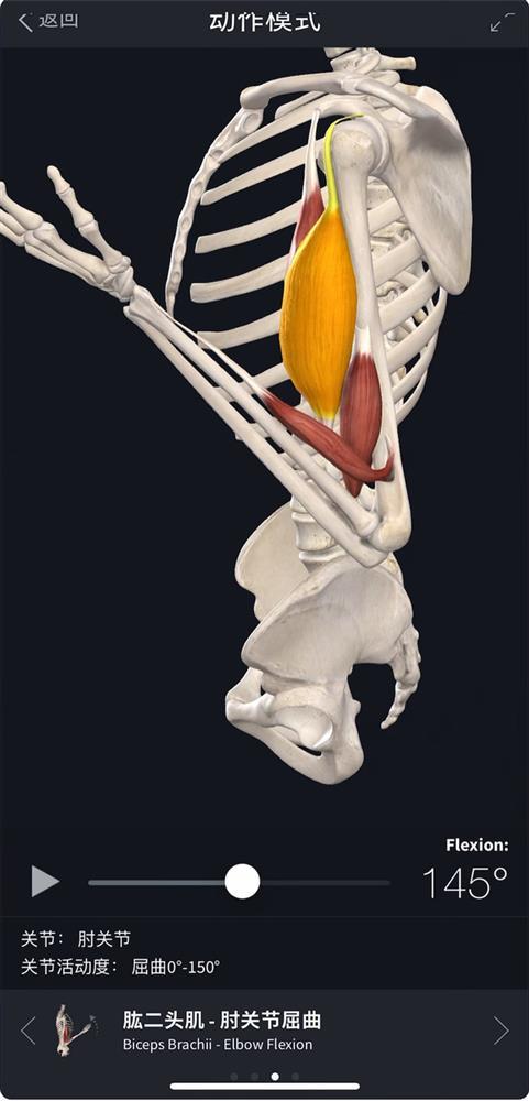 Complete Anatomy-4.jpg