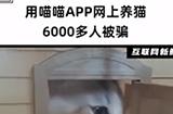 6000多人被网上养猫平台骗得血本无归