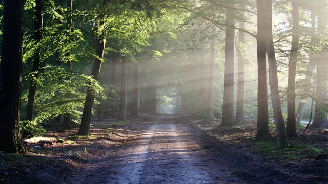 应用日推荐  让你在一瞬间进入静谧的大自然《Wildfulness 2》