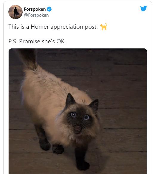 《魔咒之地》玩家担忧主角的猫命运如何  官方保证不会出事